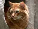 2661-cat-stand-cats.jpg
