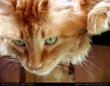 2284-cats.jpg
