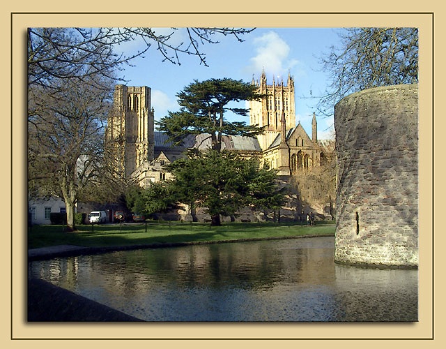 Cathedral and cedar tree, Wells