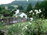 Devon: Cottage