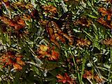 Butterfly Art.jpg(337)