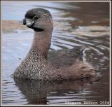 Les oiseaux des milieux humides (Birds and Wetlands)