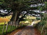 27 Feb 04 - Macrocarpa and country road