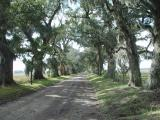 OUR LAST DAY IN CAJUN COUNTRY WE TOURED SOME OF THE OLD  PLANTATIONS......THE LANE TO THE HOUSE WAS ONCE 3 MILES  LONG
