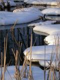 Winter Marsh.jpg