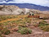 Riparian area in Death Valley