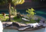 Busch White Tigers