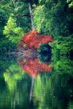 Reflection of trees on Gordon River
