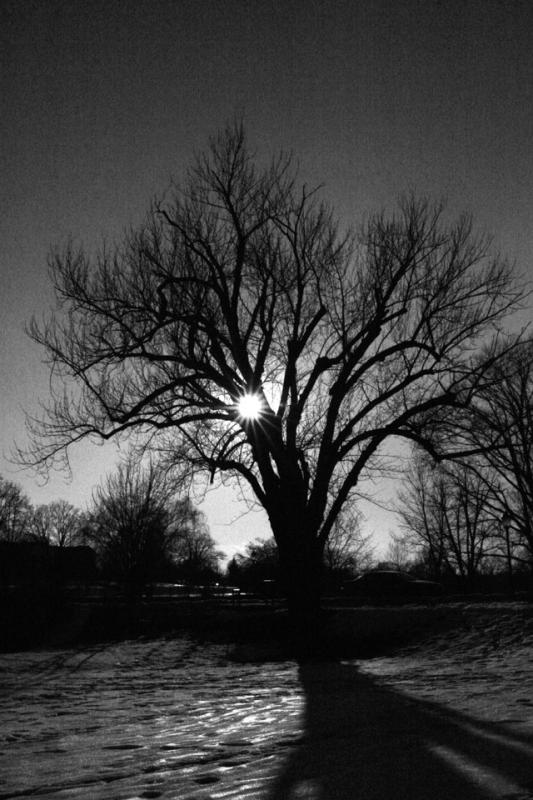 Baker Park Backlit Tree.jpg