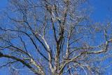 tree above.jpg