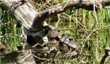 turtle2g.jpg
