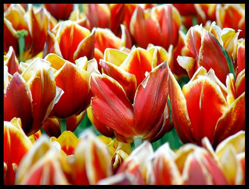 Blossom*<br>by David Clifford