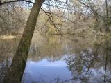 Tickfaw river1 020304.JPG