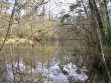 Tickfaw river2 020304.JPG