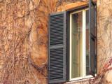 shutters and winter plants.jpg