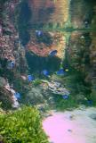 l'aquarium