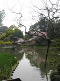 Heian Gardens