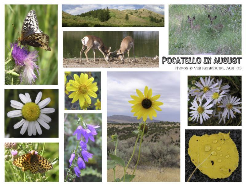 Pocatello In August, Pocatello, Idaho