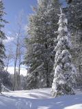 Winterszene -- Winter Scene, Buckskin Area