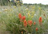 wildflowers next to Antelope Road