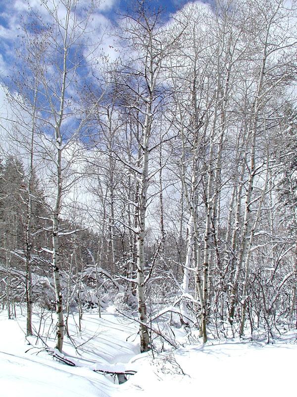 seasonal creek spring snow P4160051.jpg