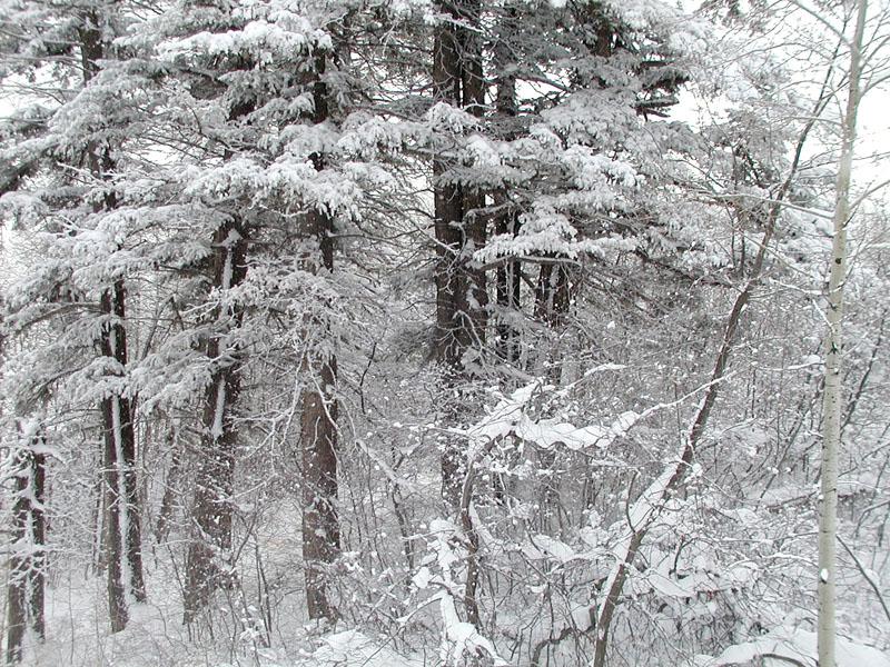 Snow Scene Pc120006