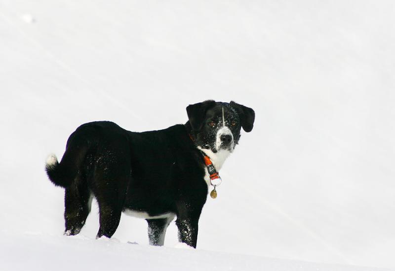 Gina im Schnee