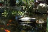 pond turtle.JPG