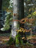 Erster Schnee im Oktober 2003