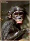 Bonobo Babe