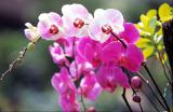 orchid3-a.jpg