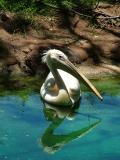 Bird with his Reflexion