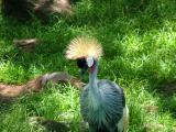 Crane's Fuzzy Head