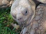 Expression of a Young Turtle
