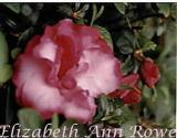 'Elizabeth Ann Rowe'