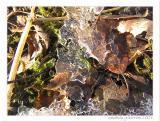 Ice lace II
