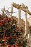 The Roman Temples at Baalbek