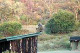 A baboon sitting on the outhouse, Makalia Falls campsite