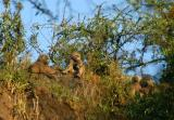 The cliffs around Makalia Falls are covered with baboons