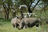Birds and rhinos