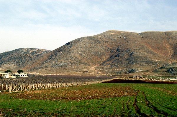 Vineyards and crops, Anjaar