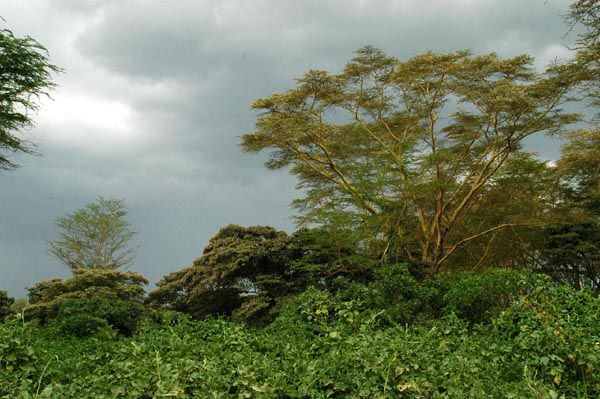 Sky darkens over leopard country