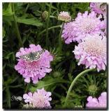 louisiana_wild_blooms