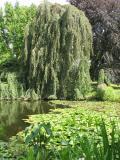 Parc de Bagatelle, Bois de Boulogne