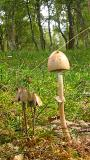 3 Small Fungus.jpg