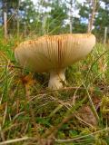 Fungus Gills.jpg