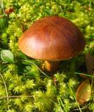 Fungus4.jpg
