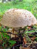 Fungus6.jpg
