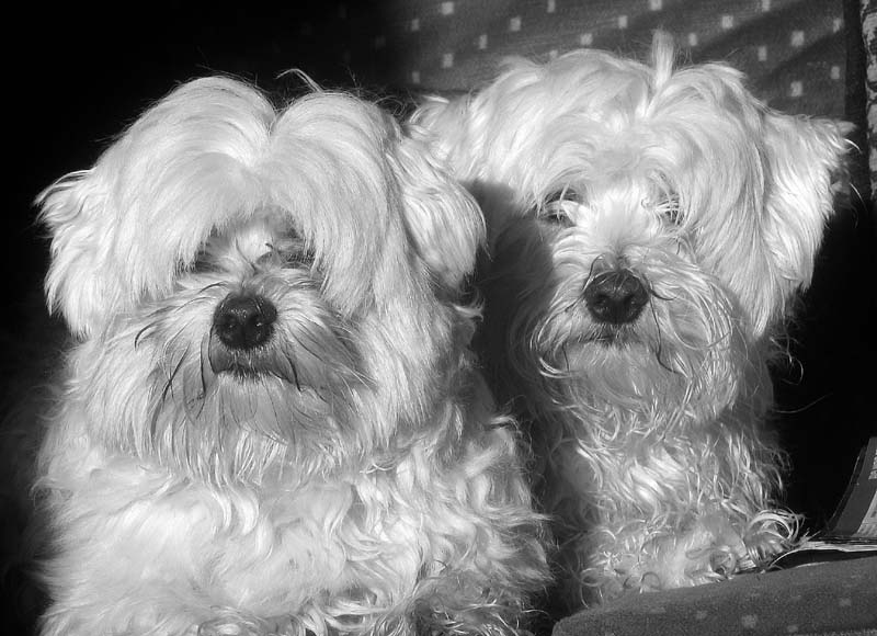 Paddy and Merlin