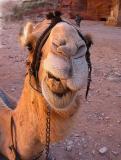 Petra, Jordan - 2003